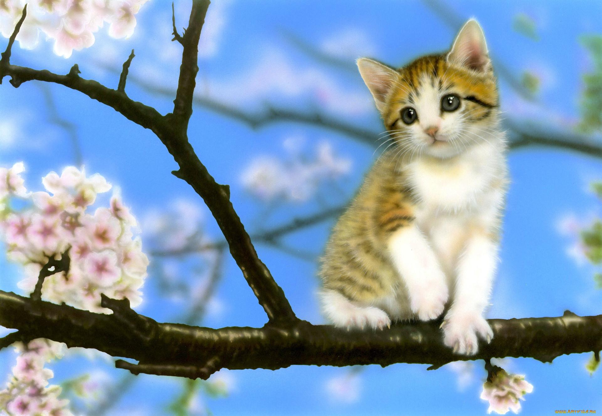 картинки про весну и котят радиостанций крым